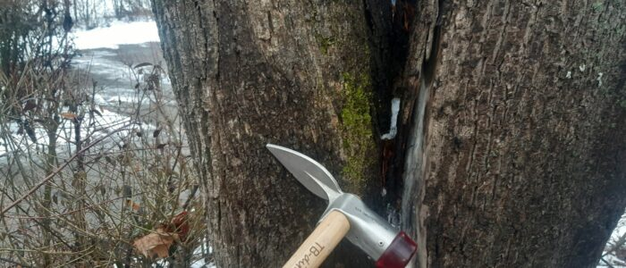 Werkzeug Baumkontrolle