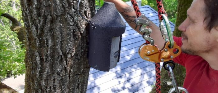 Anbringung Fledermauskasten